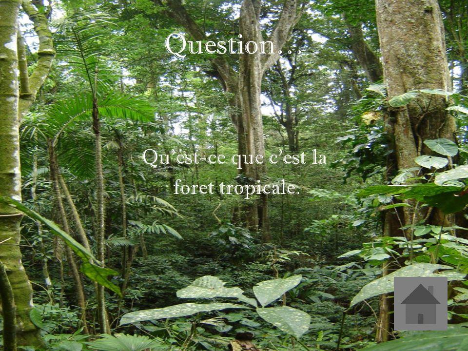 Réponse… Le foret située dans les tropiques et qui a moins de la moitié des espèces vivant du monde.