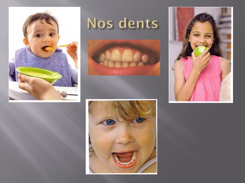 Une dent est recouverte dune partie blanche et solide que lon appelle lémail.