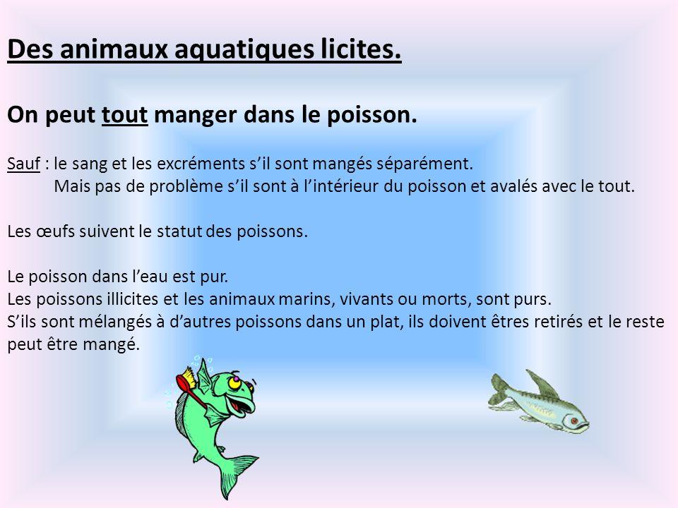 Des animaux aquatiques licites. On peut tout manger dans le poisson. Sauf : le sang et les excréments sil sont mangés séparément. Mais pas de problème