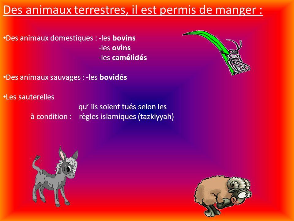 Des animaux terrestres, il est permis de manger : Des animaux domestiques : -les bovins -les ovins -les camélidés Des animaux sauvages : -les bovidés