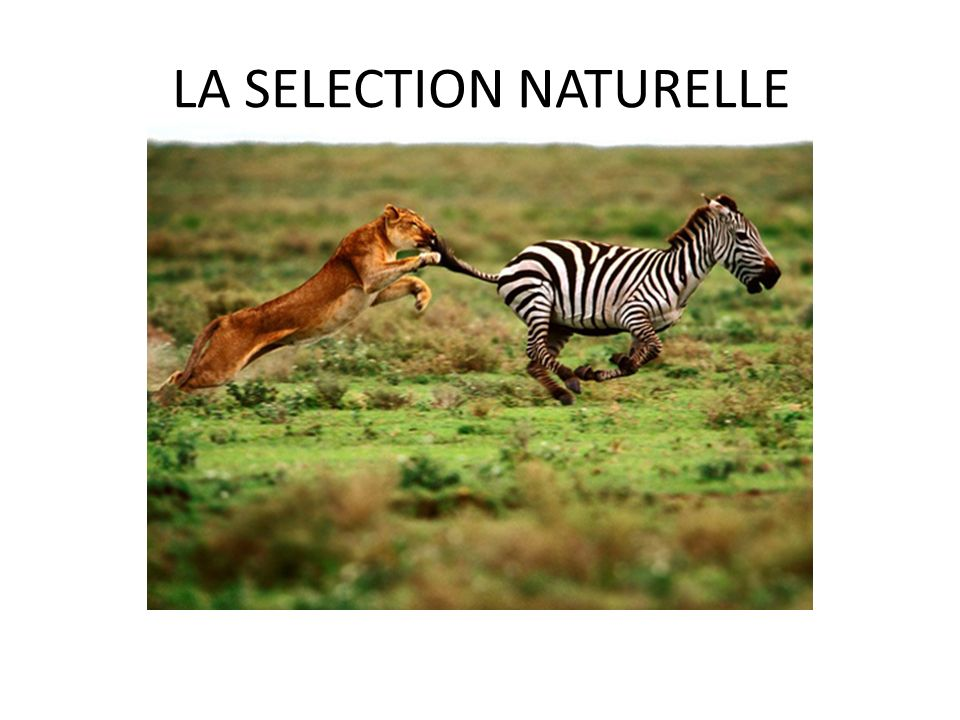 LA SELECTION NATURELLE