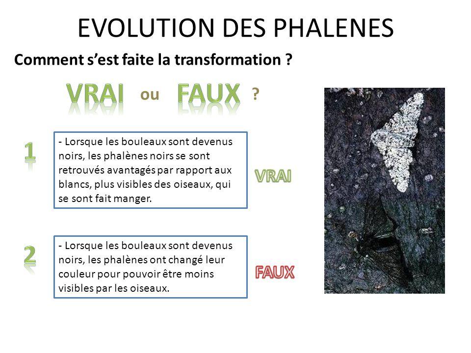 EVOLUTION DES PHALENES Comment sest faite la transformation ? - Lorsque les bouleaux sont devenus noirs, les phalènes noirs se sont retrouvés avantagé
