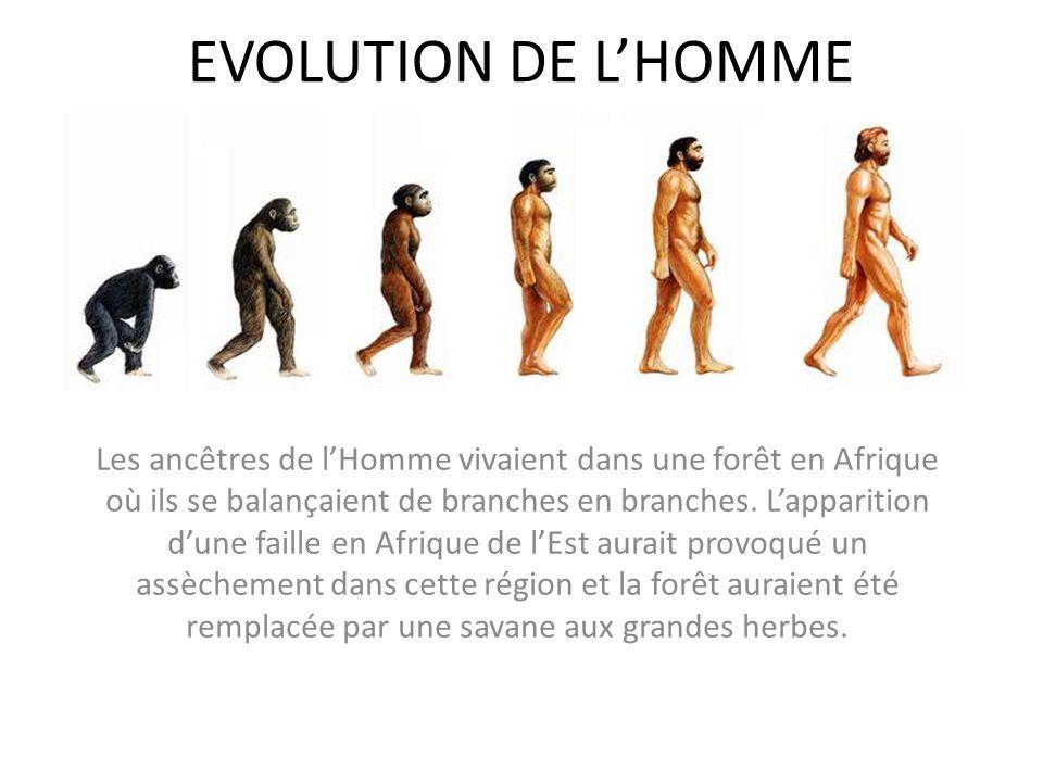 EVOLUTION DE LHOMME Les ancêtres de lHomme vivaient dans une forêt en Afrique où ils se balançaient de branches en branches. Lapparition dune faille e