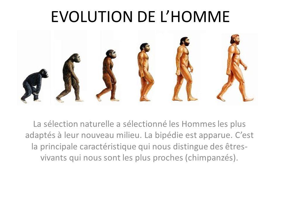 EVOLUTION DE LHOMME La sélection naturelle a sélectionné les Hommes les plus adaptés à leur nouveau milieu. La bipédie est apparue. Cest la principale