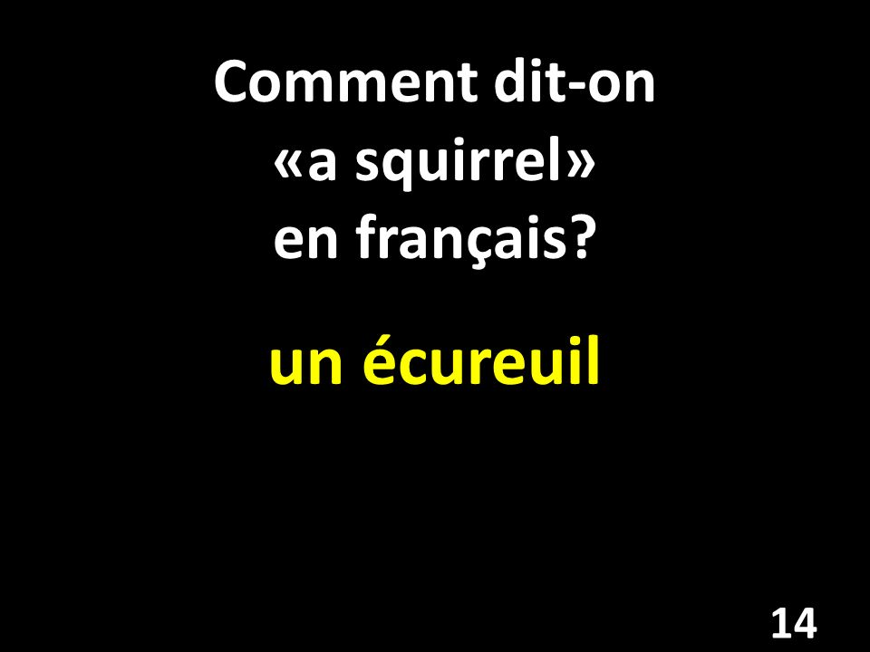 Comment dit-on «a squirrel» en français? un écureuil 14