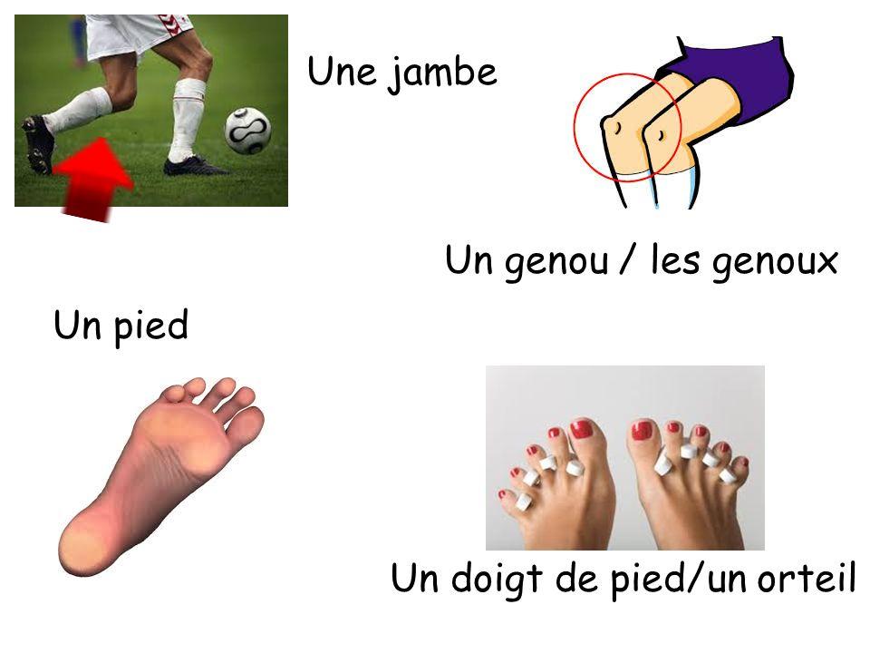 Une jambe Un genou / les genoux Un doigt de pied/un orteil Un pied