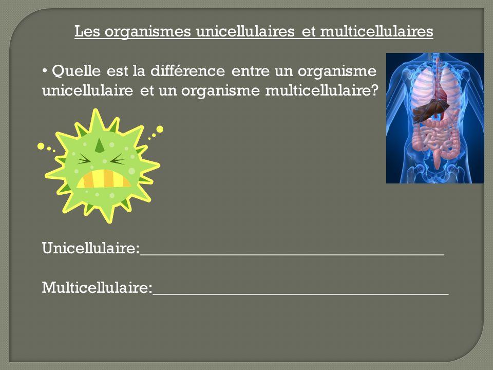 Les organismes unicellulaires et multicellulaires Quelle est la différence entre un organisme unicellulaire et un organisme multicellulaire? Unicellul