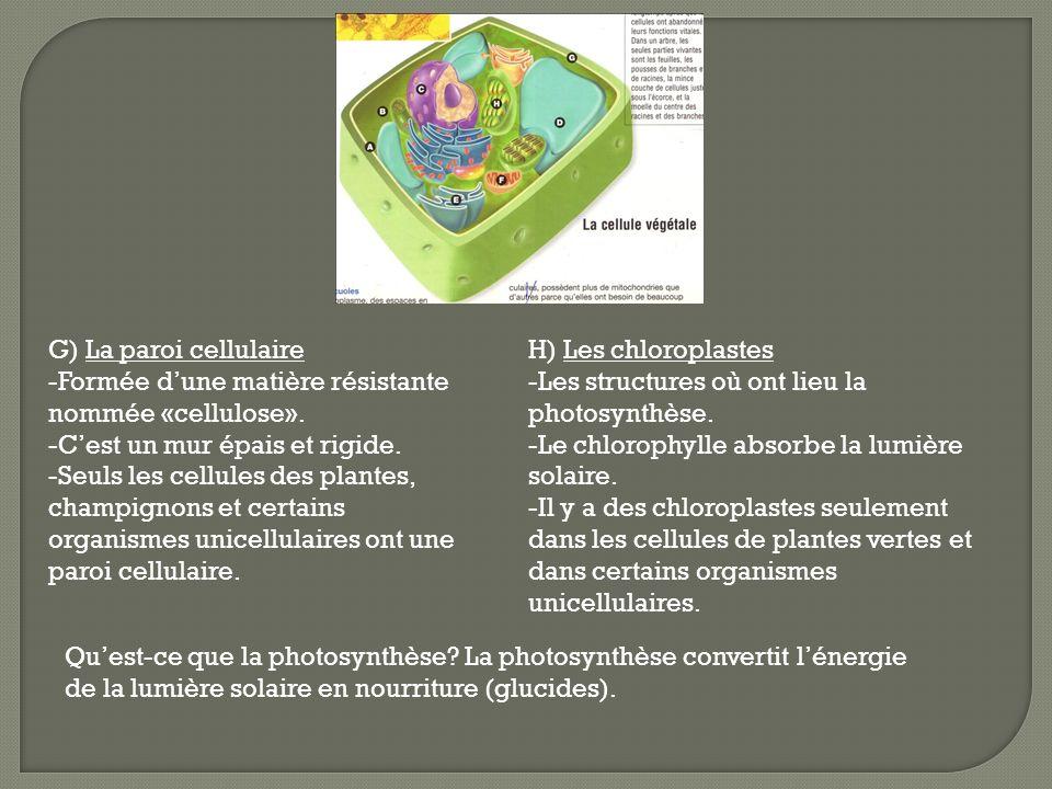 G) La paroi cellulaire -Formée dune matière résistante nommée «cellulose». -Cest un mur épais et rigide. -Seuls les cellules des plantes, champignons