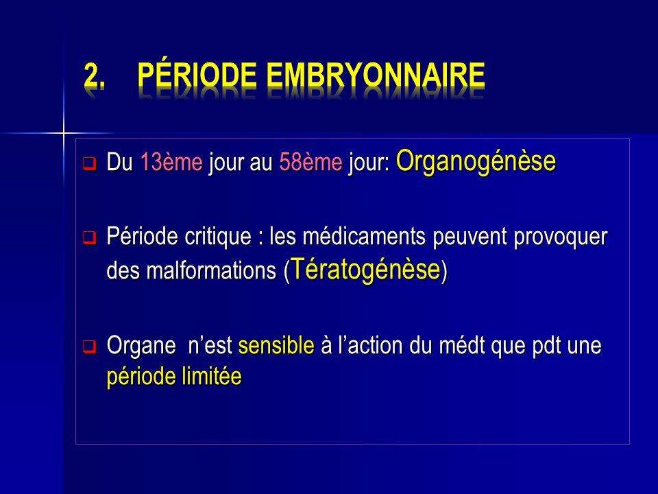 Du 13ème jour au 58ème jour: Organogénèse Du 13ème jour au 58ème jour: Organogénèse Période critique : les médicaments peuvent provoquer des malformat