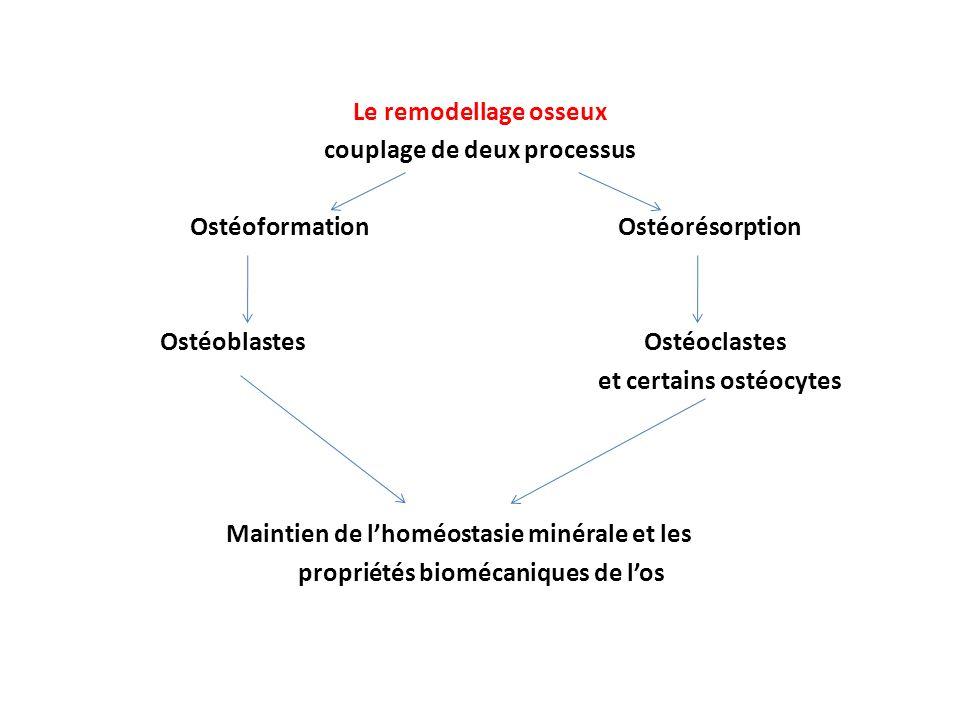 Hypercalcémie (excès de calcium) > 3.0 mmol/L Causes Hyperparathyroïdisme ( PTH et Ca) Ostéoporose [Ca] sérique car résorption osseuse Sarcoïdose (cancer des os)(excès de synthèse de vitamine D) Hypervitaminose D : absorption intestinale Acidose : Ca ionisé Maladie de Paget (hypercalcémie légère)