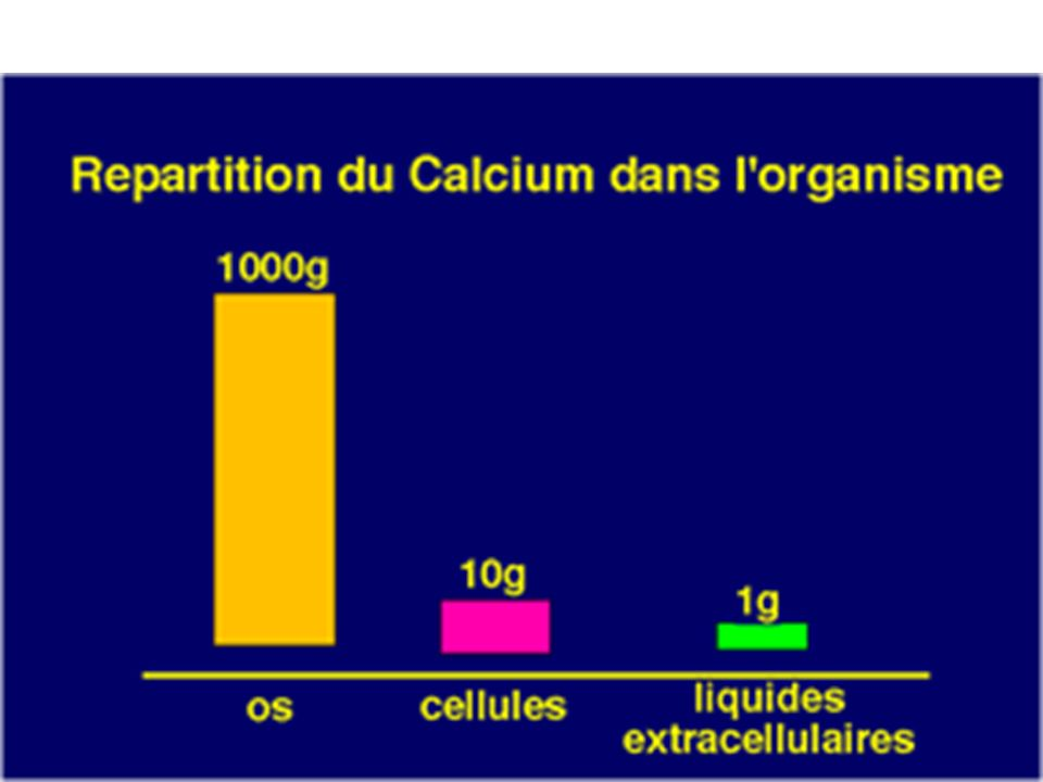 Hypocalcémie ( déficit en calcium) < 1.75 mmol/L Causes Hypoparathyroïdisme ( PTH) Avitaminose D Problèmes dabsorption intestinale Néphrites ( de lexcrétion rénale ) (insuffisance rénale chronique) Alcalose rend les sels de calcium moins solubles Hypoprotéinémie ( albumine)