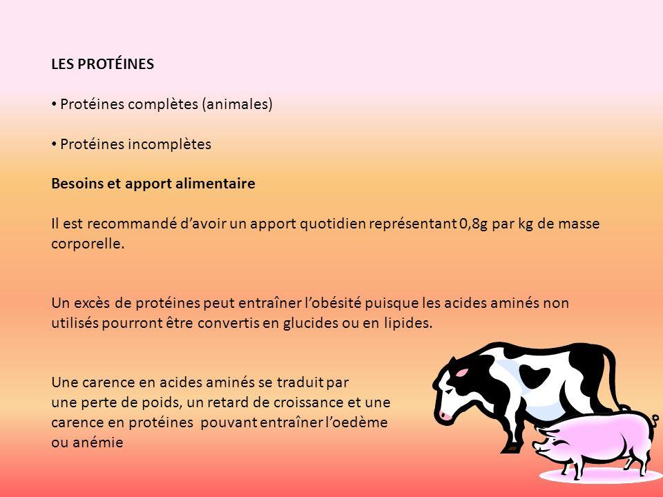 LES PROTÉINES Protéines complètes (animales) Protéines incomplètes Besoins et apport alimentaire Il est recommandé davoir un apport quotidien représen