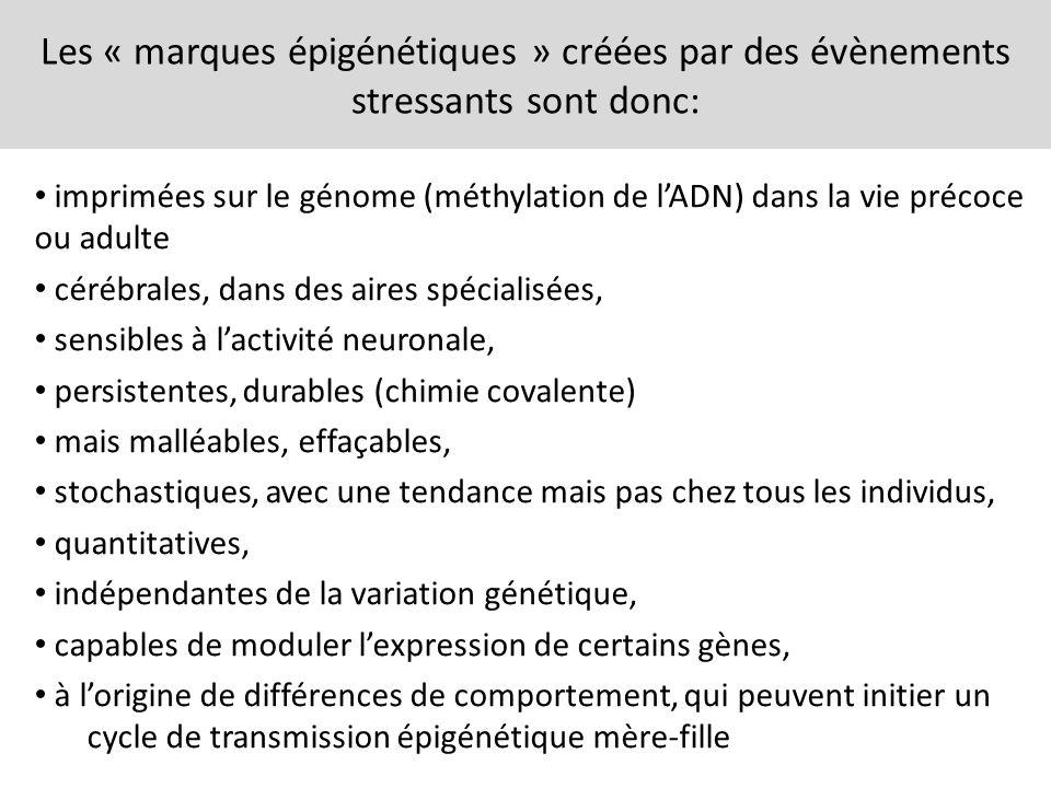 Les « marques épigénétiques » créées par des évènements stressants sont donc: imprimées sur le génome (méthylation de lADN) dans la vie précoce ou adu