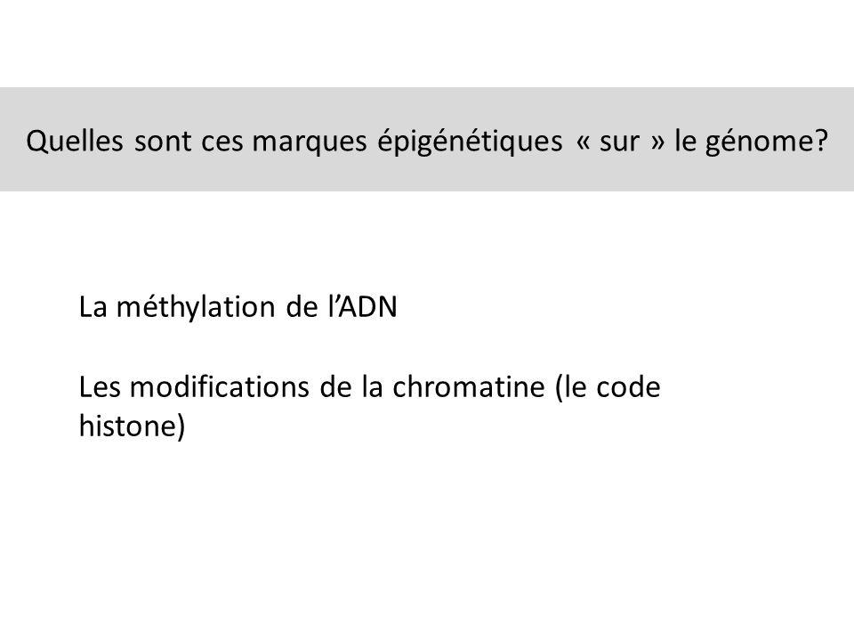 Quelles sont ces marques épigénétiques « sur » le génome? La méthylation de lADN Les modifications de la chromatine (le code histone)