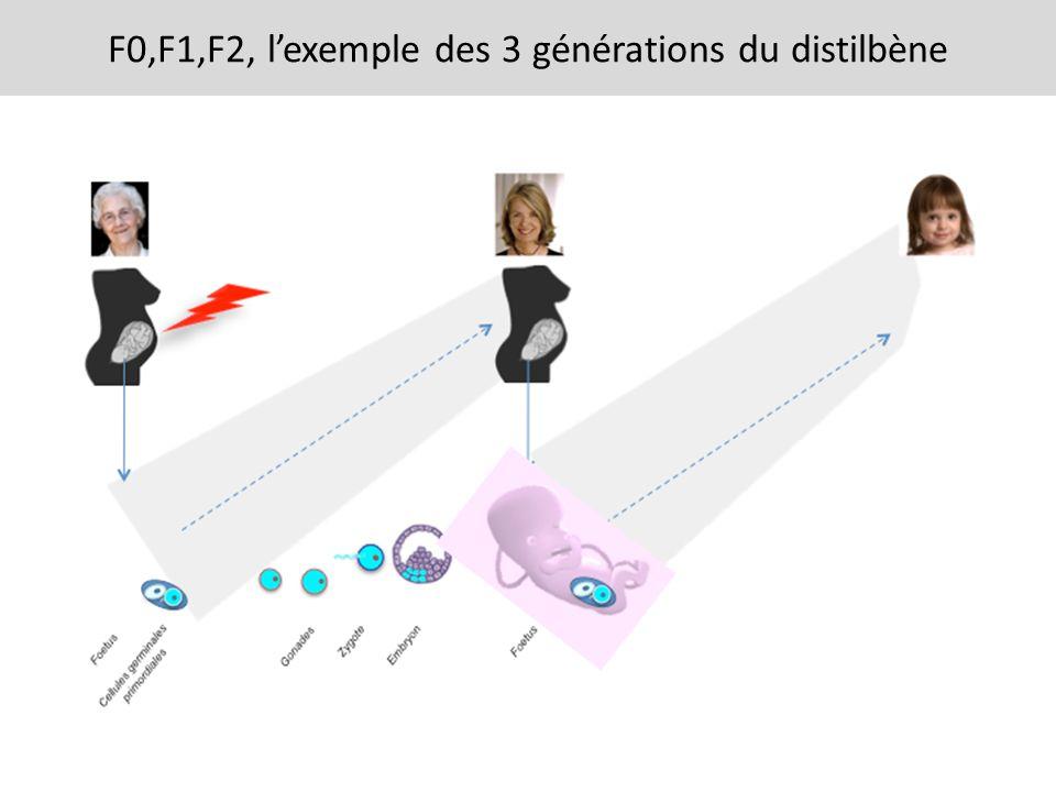 F0,F1,F2, lexemple des 3 générations du distilbène