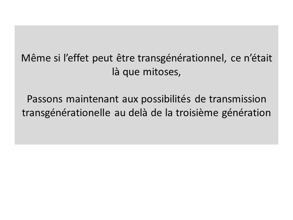 Même si leffet peut être transgénérationnel, ce nétait là que mitoses, Passons maintenant aux possibilités de transmission transgénérationelle au delà