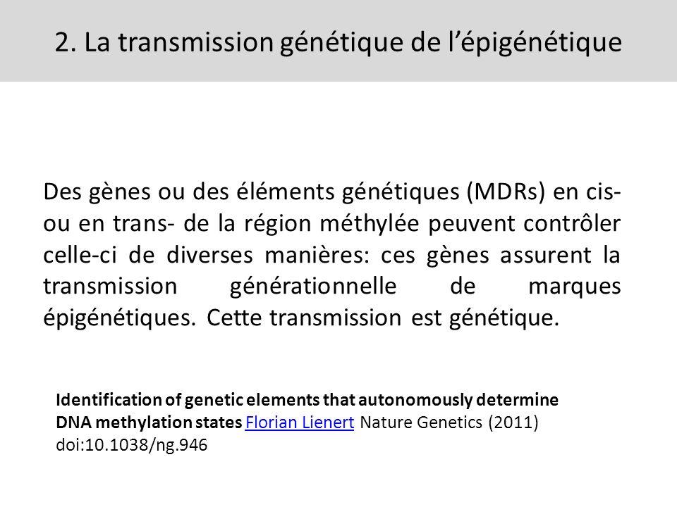 2. La transmission génétique de lépigénétique Des gènes ou des éléments génétiques (MDRs) en cis- ou en trans- de la région méthylée peuvent contrôler