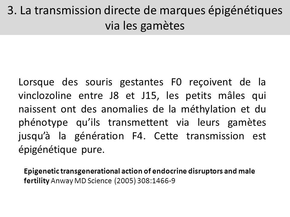 3. La transmission directe de marques épigénétiques via les gamètes Lorsque des souris gestantes F0 reçoivent de la vinclozoline entre J8 et J15, les