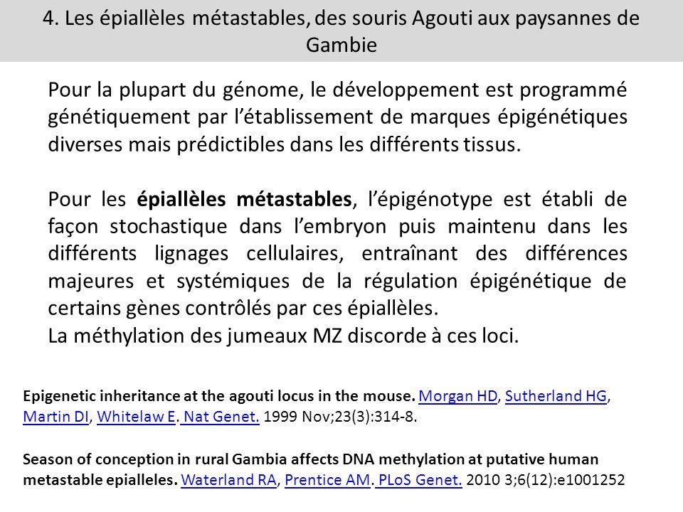 4. Les épiallèles métastables, des souris Agouti aux paysannes de Gambie Pour la plupart du génome, le développement est programmé génétiquement par l