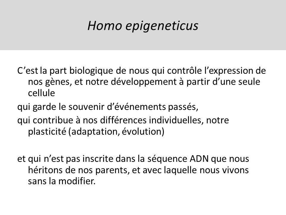 Homo epigeneticus Cest la part biologique de nous qui contrôle lexpression de nos gènes, et notre développement à partir dune seule cellule qui garde