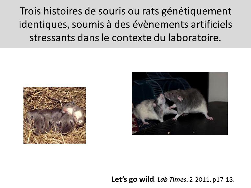 Trois histoires de souris ou rats génétiquement identiques, soumis à des évènements artificiels stressants dans le contexte du laboratoire. Lets go wi