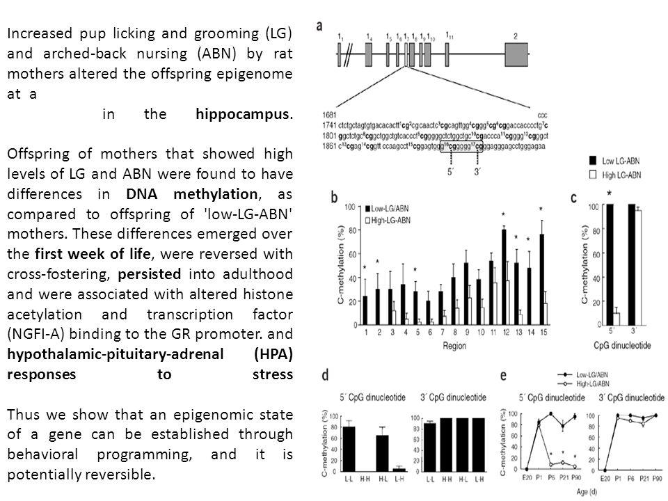 concentrés au sein de CpG Islands (>200bp riches en CpGs)généralement non méthylés ; 70% des promoteurs contiennent des CGI ou répartis isolément sur lensemble du génome: -shores (régions de 2kb autour du CGI), conservées chez les mammifères, présentent des différences de méthylation entre les tissus (76% des T-DMRs) -gene-body : les gènes actifs sont hautement méthylés; les jonctions introns-exons présentent une variation de méthylation caractéristique -rétrotransposon s hautement méthylés afin de réprimer leur expression CGCGCGCCGCGC CGCCGCGCGC CGCG CCGCG TSSPutative TSS CpG islandShore 2kb PromoterGene Body Intron Exon junction me DNA pol TF me Le génome humain compte 3.10 9 bp et 3.10 7 CpG