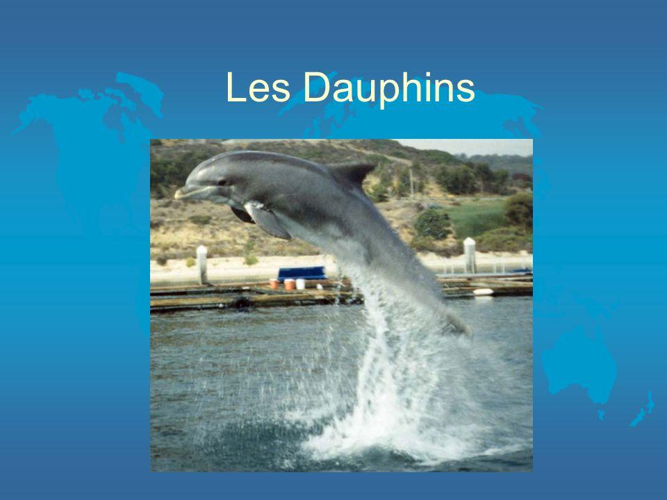Nourriture OLes dauphins mangent OLe hareng OLe maaquereau OLe cabillaud OEt le calmar OPresque tout leau dont il a besoin vient de la nourriture quil mange