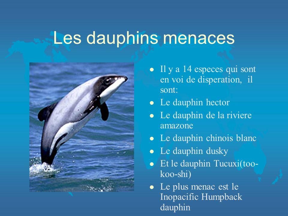 Les dauphins menaces l Il y a 14 especes qui sont en voi de disperation, il sont: l Le dauphin hector l Le dauphin de la riviere amazone l Le dauphin