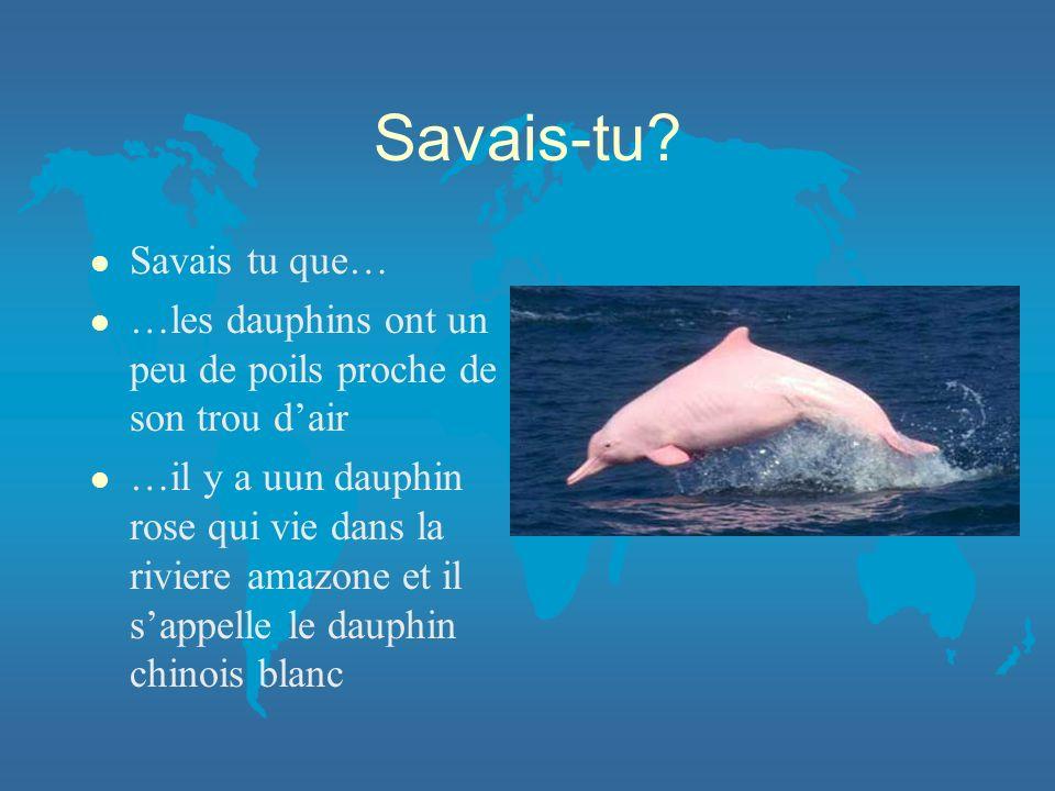 Savais-tu? l Savais tu que… l …les dauphins ont un peu de poils proche de son trou dair l …il y a uun dauphin rose qui vie dans la riviere amazone et