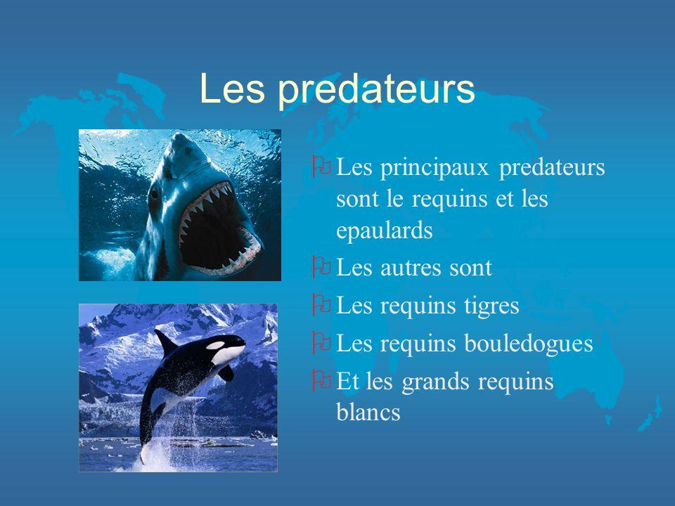 Les predateurs O Les principaux predateurs sont le requins et les epaulards O Les autres sont O Les requins tigres O Les requins bouledogues O Et les
