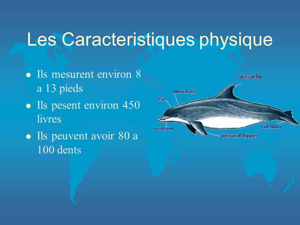 Les Caracteristiques physique l Ils mesurent environ 8 a 13 pieds l Ils pesent environ 450 livres l Ils peuvent avoir 80 a 100 dents