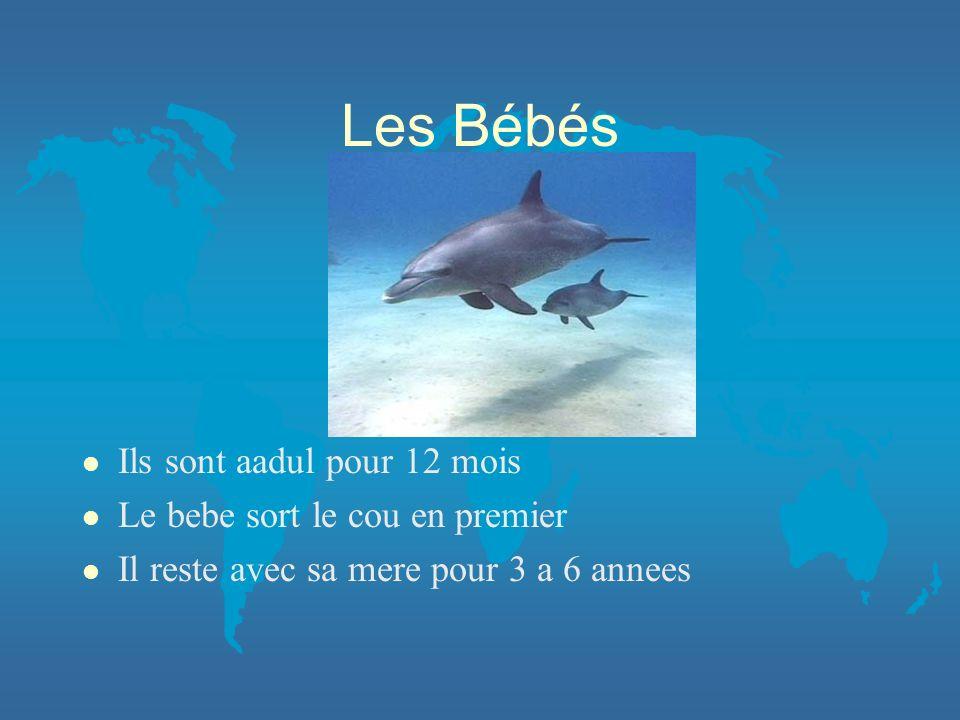 Nage l Ils peuvent plonger au maximum 1000 pieds l Ils peuvent nager de 40 a 60 m/h l Ils peuvent retenir leur soufflepour 30 minutes l Et sauter au maximum 20 pieds