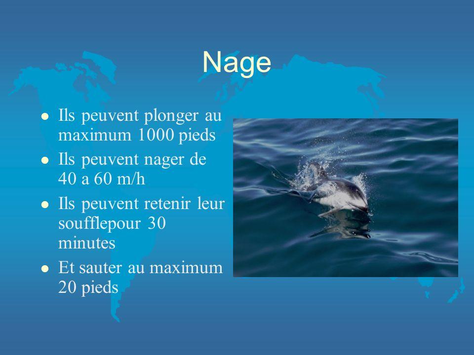 Nage l Ils peuvent plonger au maximum 1000 pieds l Ils peuvent nager de 40 a 60 m/h l Ils peuvent retenir leur soufflepour 30 minutes l Et sauter au m