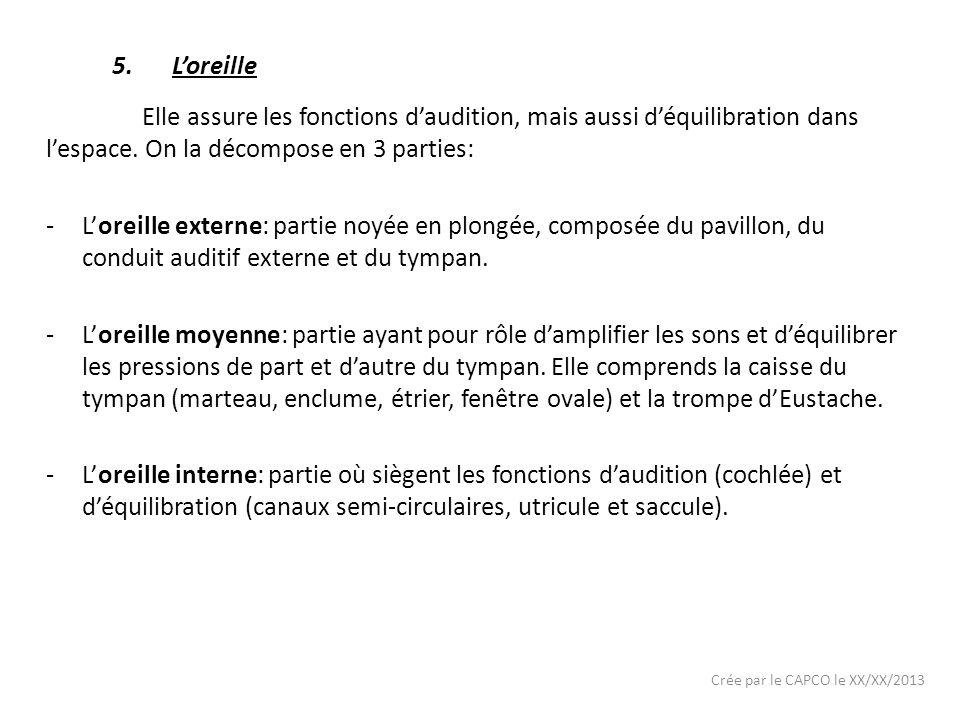 Crée par le CAPCO le XX/XX/2013 5.Loreille Elle assure les fonctions daudition, mais aussi déquilibration dans lespace. On la décompose en 3 parties:
