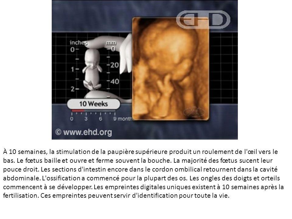 À 10 semaines, la stimulation de la paupière supérieure produit un roulement de l'œil vers le bas. Le fœtus baille et ouvre et ferme souvent la bouche
