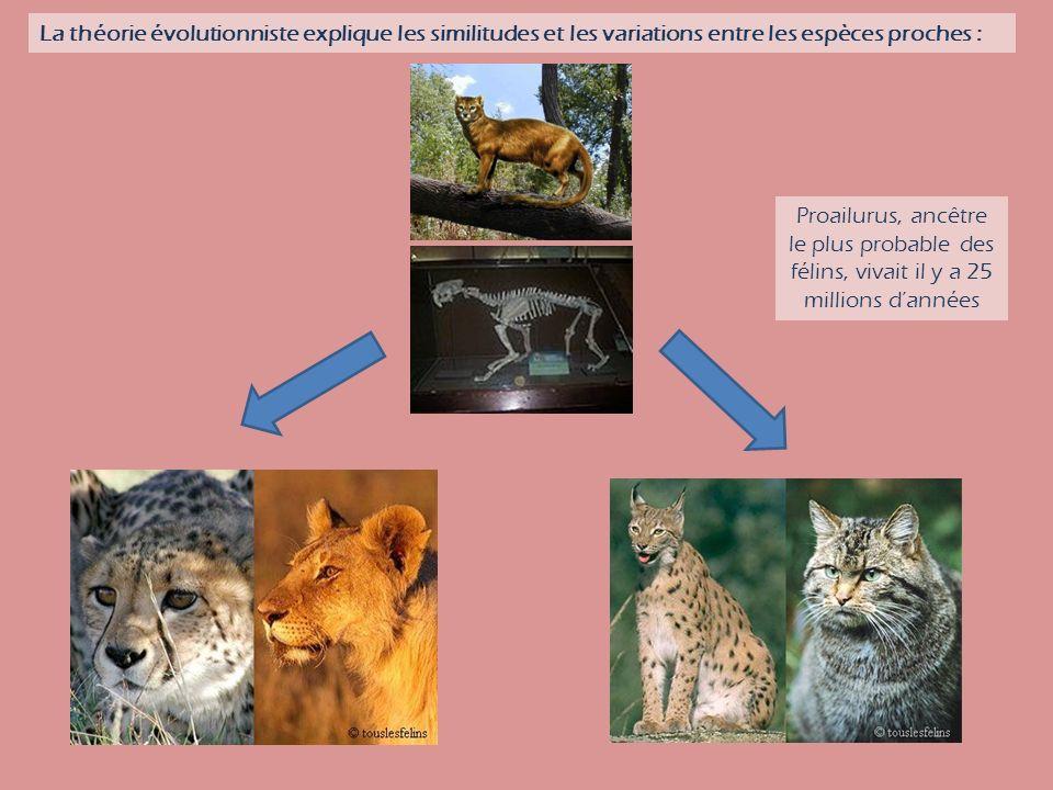 La théorie évolutionniste explique les similitudes et les variations entre les espèces proches : Proailurus, ancêtre le plus probable des félins, vivait il y a 25 millions dannées
