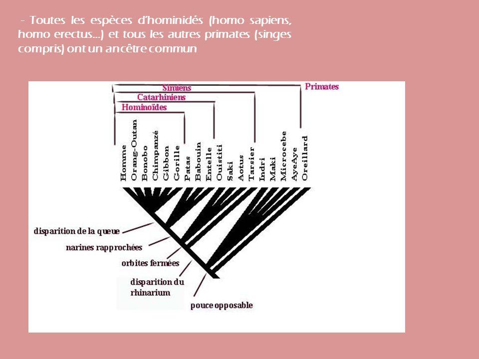 - Toutes les espèces dhominidés (homo sapiens, homo erectus…) et tous les autres primates (singes compris) ont un ancêtre commun