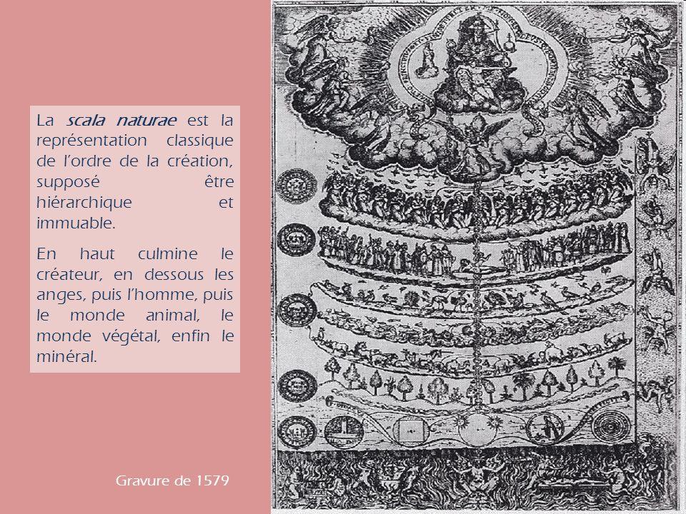 La scala naturae est la représentation classique de lordre de la création, supposé être hiérarchique et immuable.
