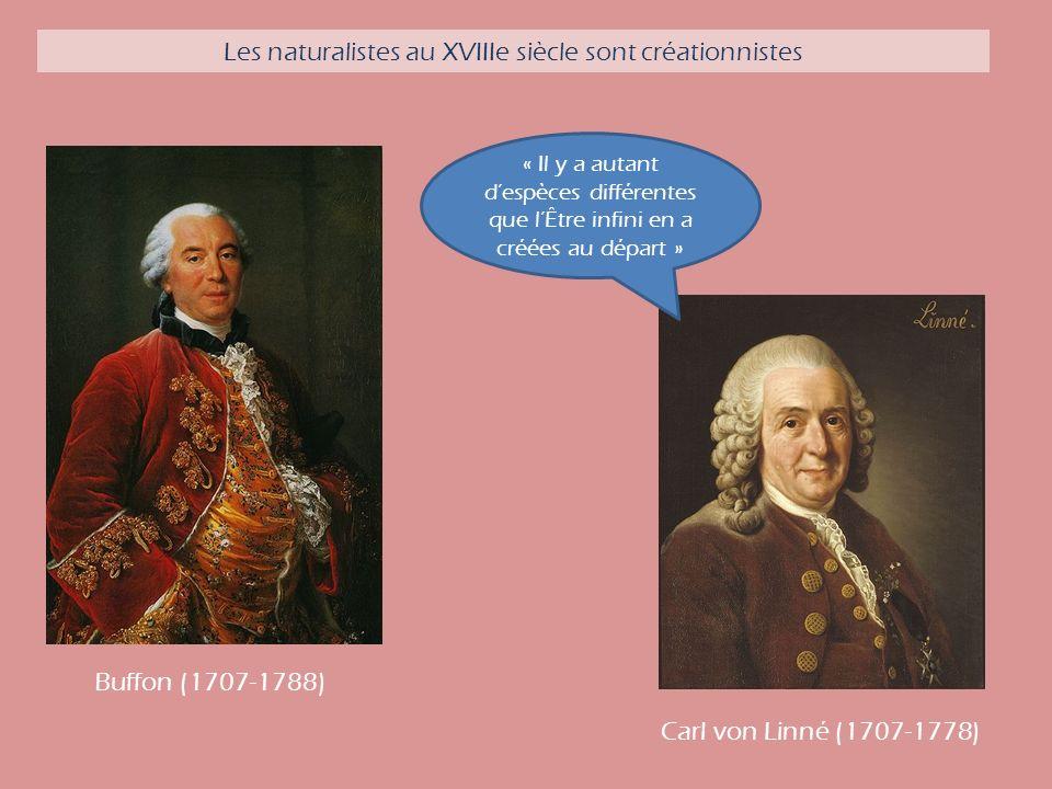 Carl von Linné (1707-1778) « Il y a autant despèces différentes que lÊtre infini en a créées au départ » Buffon (1707-1788) Les naturalistes au XVIIIe siècle sont créationnistes