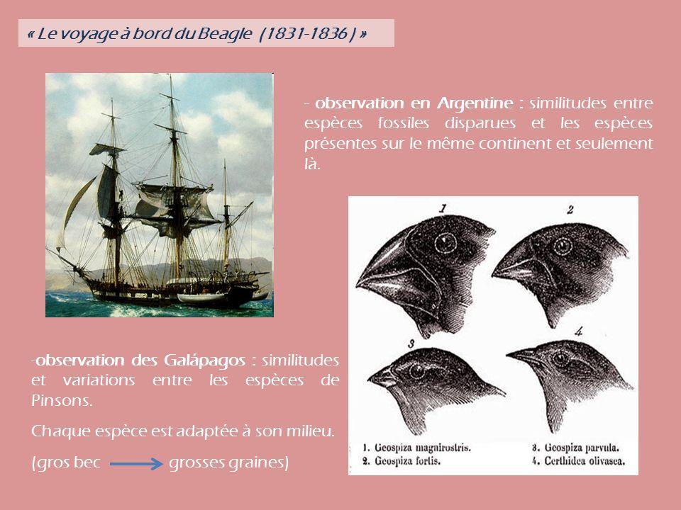 - observation en Argentine : similitudes entre espèces fossiles disparues et les espèces présentes sur le même continent et seulement là.