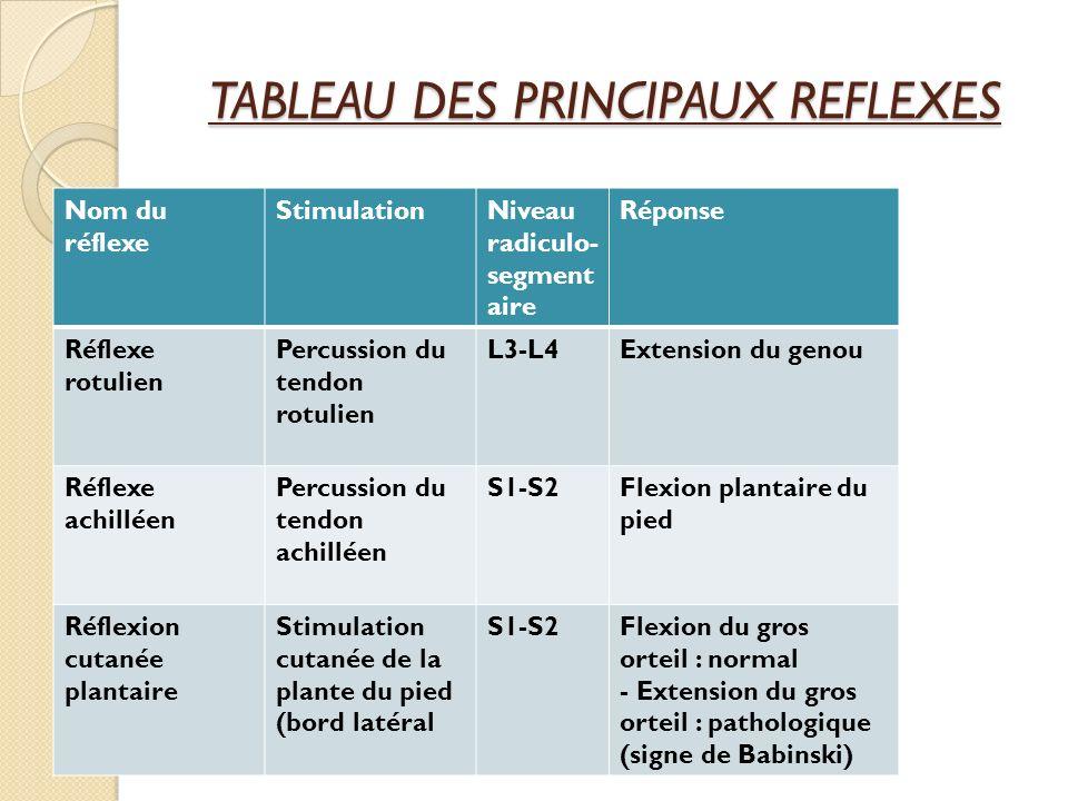 TABLEAU DES PRINCIPAUX REFLEXES Nom du réflexe StimulationNiveau radiculo- segment aire Réponse Réflexe rotulien Percussion du tendon rotulien L3-L4Ex