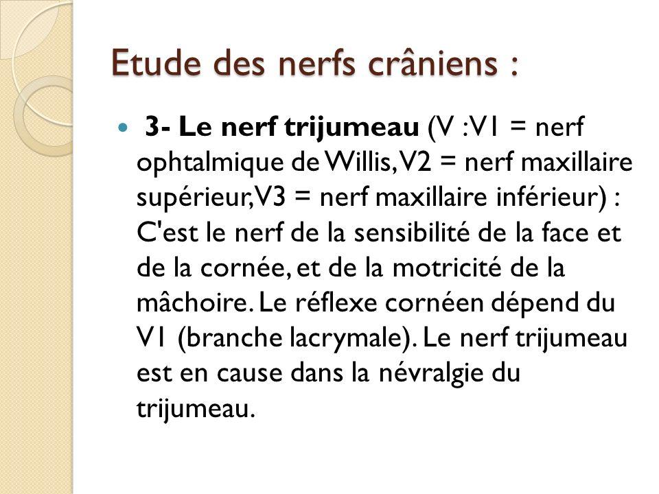 Etude des nerfs crâniens : 3- Le nerf trijumeau (V : V1 = nerf ophtalmique de Willis, V2 = nerf maxillaire supérieur, V3 = nerf maxillaire inférieur)
