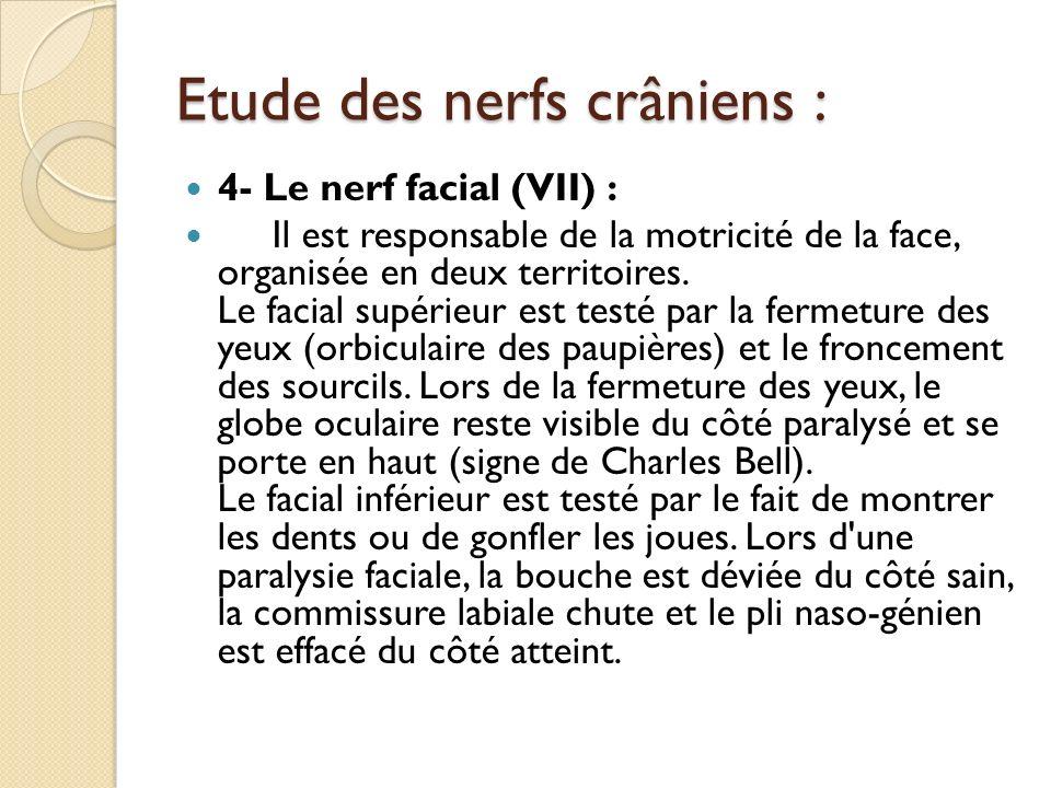 Etude des nerfs crâniens : 4- Le nerf facial (VII) : Il est responsable de la motricité de la face, organisée en deux territoires. Le facial supérieur