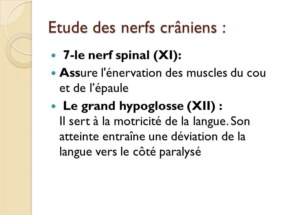 Etude des nerfs crâniens : 7-le nerf spinal (XI): Assure l'énervation des muscles du cou et de lépaule Le grand hypoglosse (XII) : Il sert à la motric