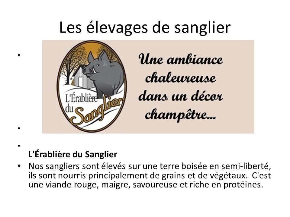Les élevages de sanglier L Érablière du Sanglier Nos sangliers sont élevés sur une terre boisée en semi-liberté, ils sont nourris principalement de grains et de végétaux.