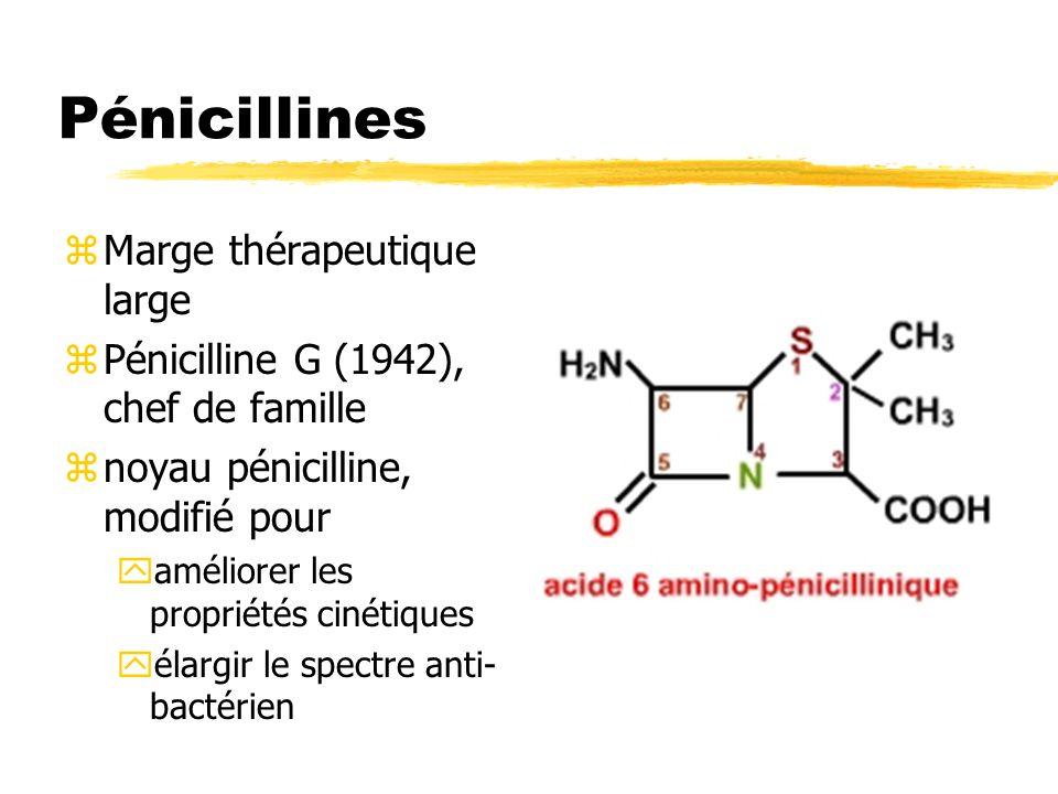 Pénicillines zMarge thérapeutique large zPénicilline G (1942), chef de famille znoyau pénicilline, modifié pour yaméliorer les propriétés cinétiques y