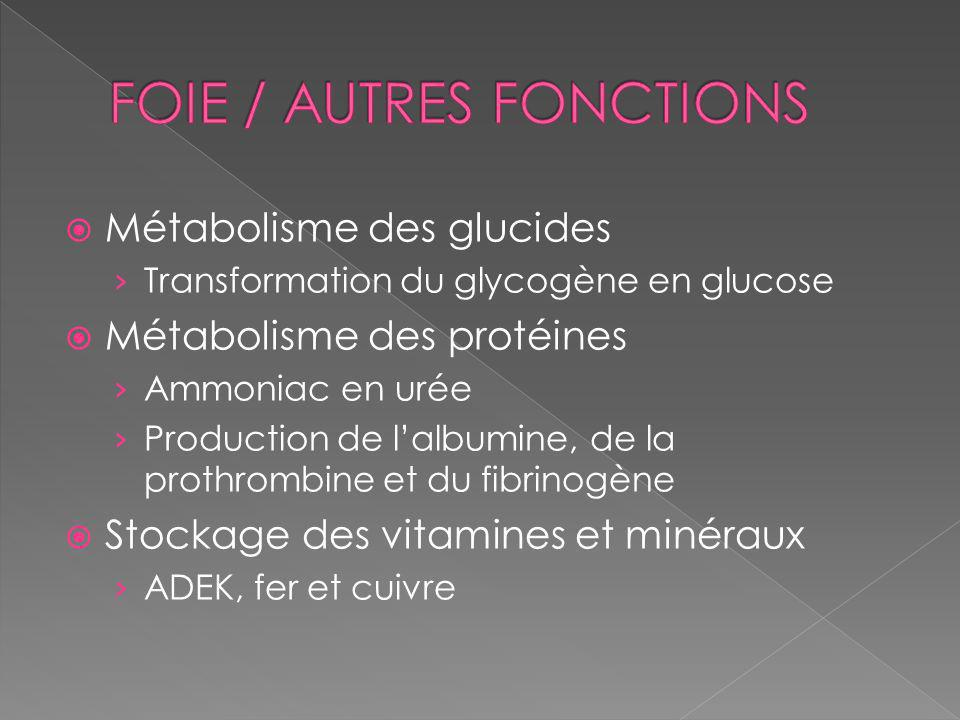 Métabolisme des glucides Transformation du glycogène en glucose Métabolisme des protéines Ammoniac en urée Production de lalbumine, de la prothrombine et du fibrinogène Stockage des vitamines et minéraux ADEK, fer et cuivre