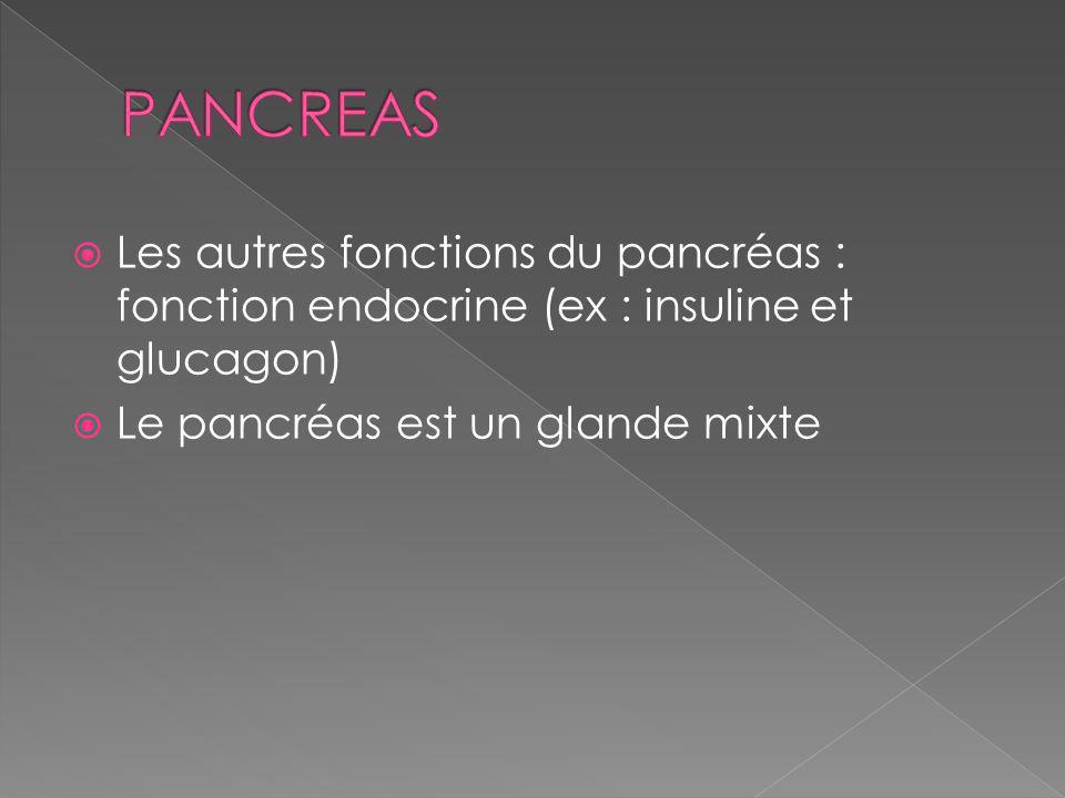 Les autres fonctions du pancréas : fonction endocrine (ex : insuline et glucagon) Le pancréas est un glande mixte