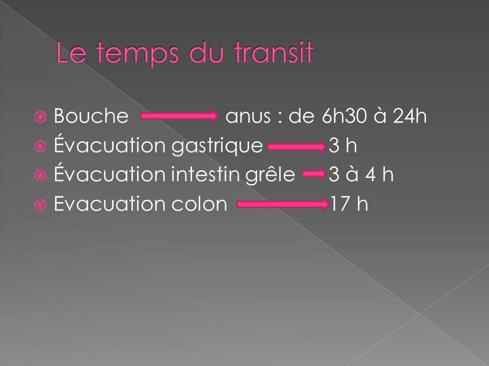 Boucheanus : de 6h30 à 24h Évacuation gastrique 3 h Évacuation intestin grêle 3 à 4 h Evacuation colon 17 h