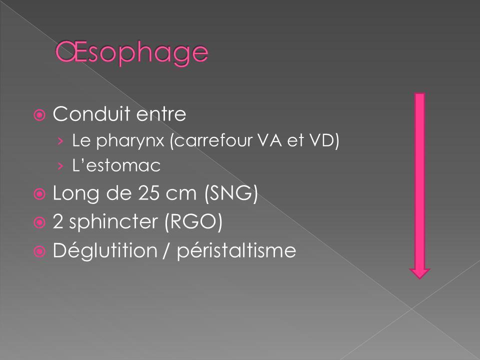 Conduit entre Le pharynx (carrefour VA et VD) Lestomac Long de 25 cm (SNG) 2 sphincter (RGO) Déglutition / péristaltisme